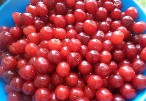 Простой рецепт компота из вишни на зиму